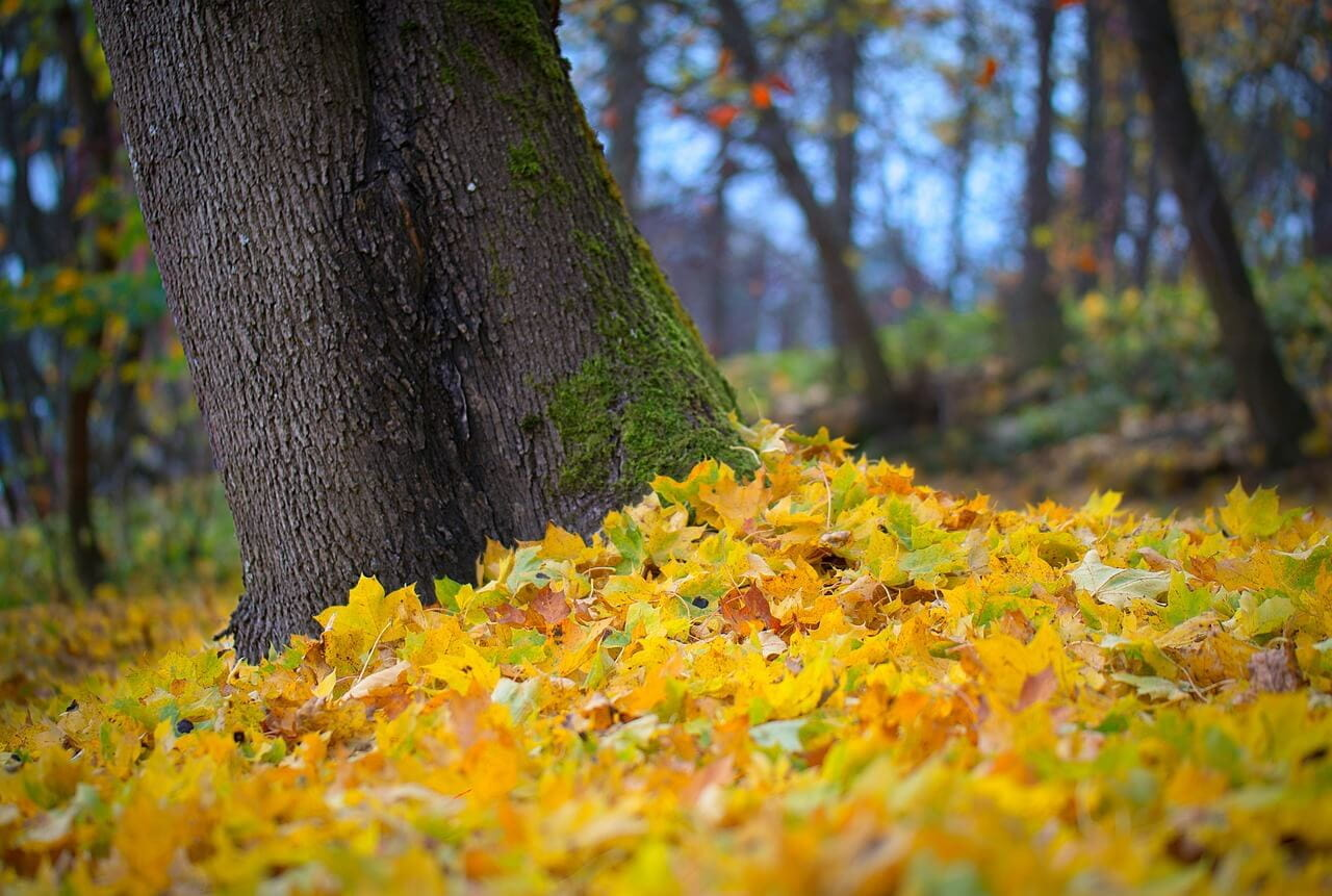 Ahorn als beliebtes Parkettholz
